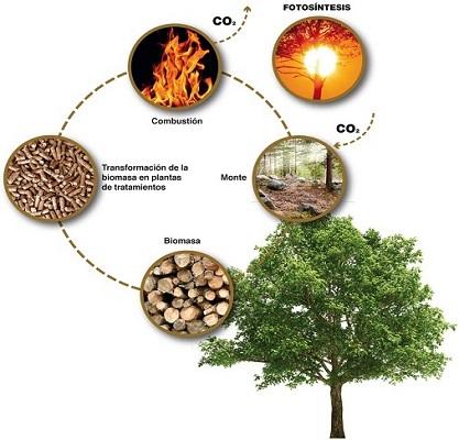 Biomasa1_417x400